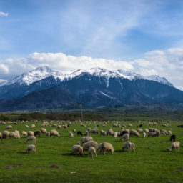 Into the Transylvanian Hills